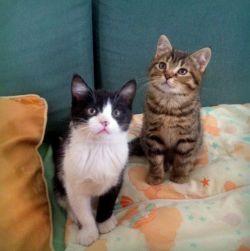 Koty z terenu firmy Transbud (Warszawa-Wola) POMÓŻCIE BEZDOMNIAKOM!